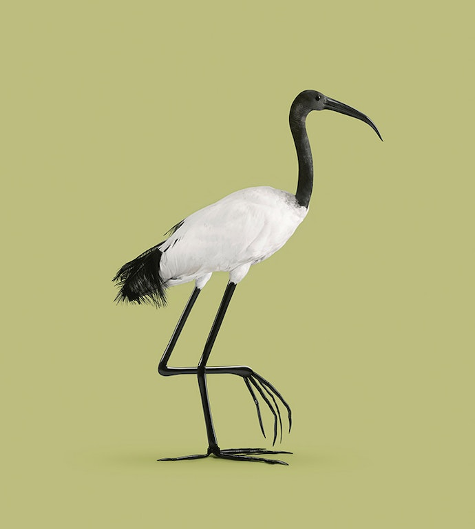 Vincent-Fournier---Ibis-(from-the-series-'Post-Natural-History')