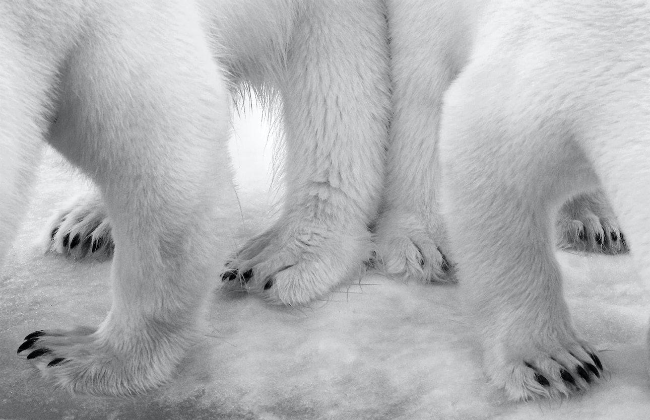 wildlife_05