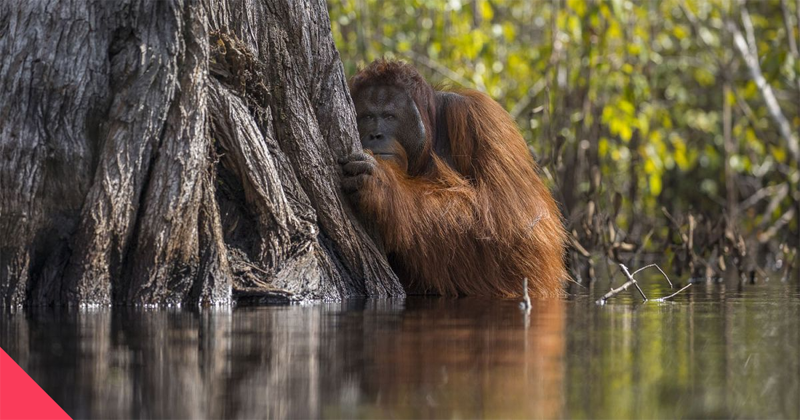 Победители конкурса National Geographic Nature Photographer of the Year — Bird In Flight