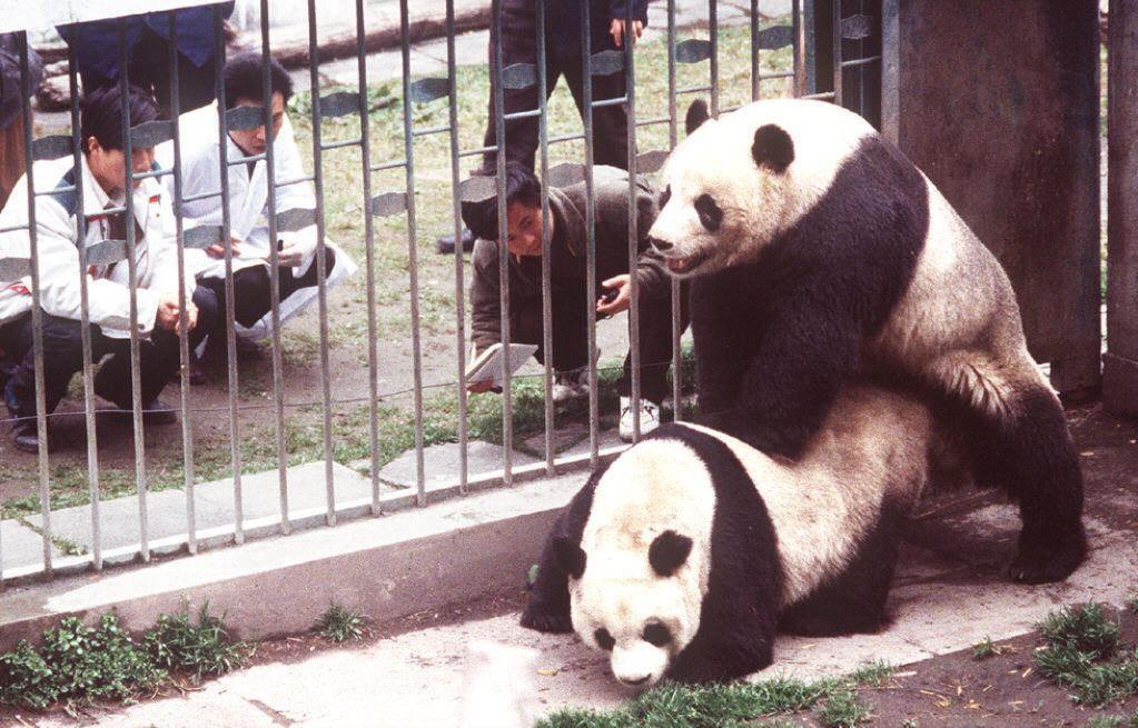 CHINA-PANDA