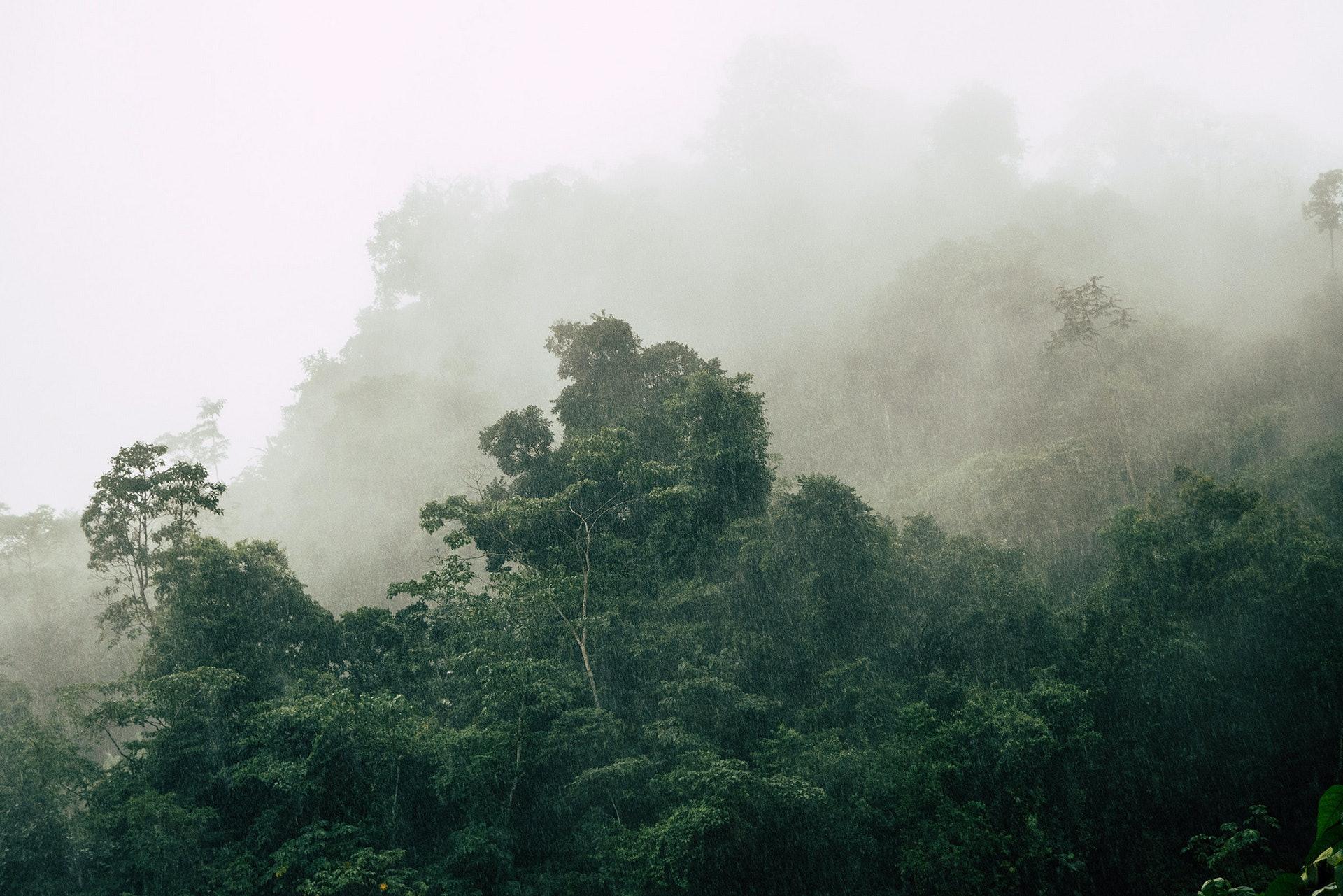 Amazonia_20