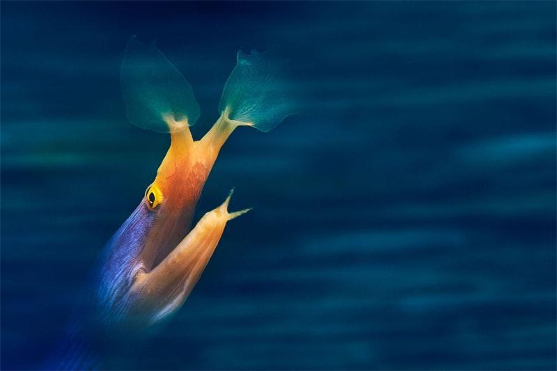 underwater_07