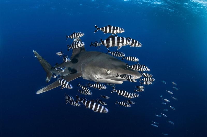 underwater_09