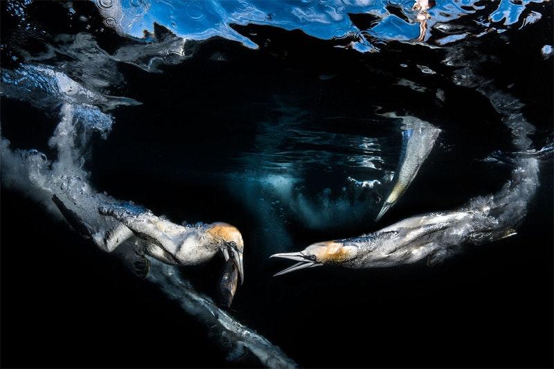 underwater_10