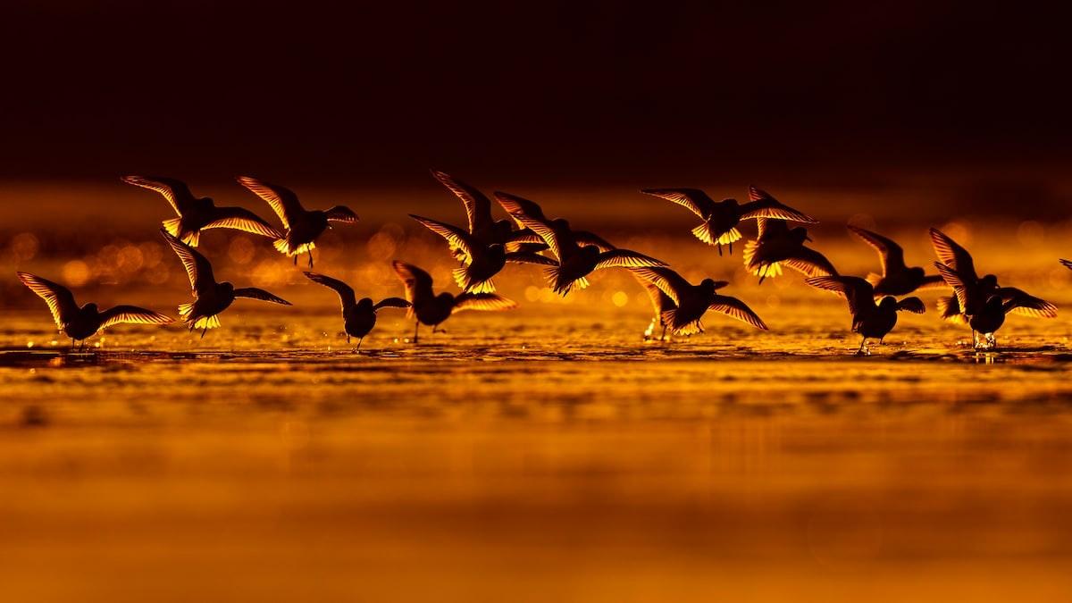 bird-photographer-of-the-year-contest_05