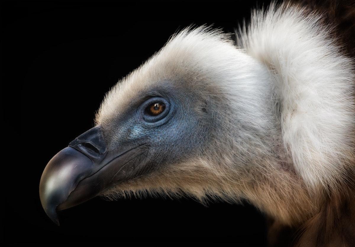 bird-photographer-of-the-year-contest_07