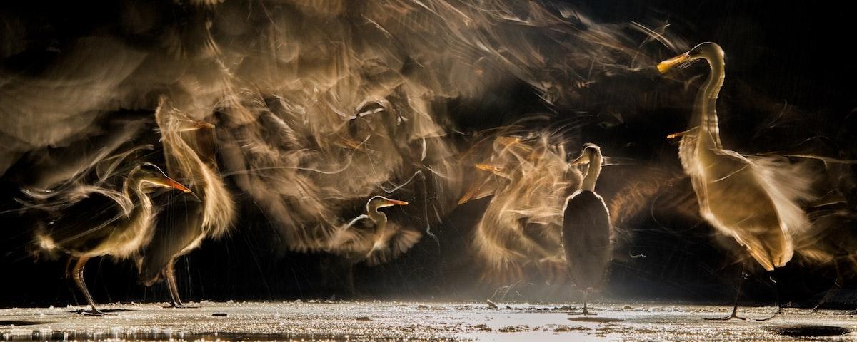 bird-photographer-of-the-year-contest_08