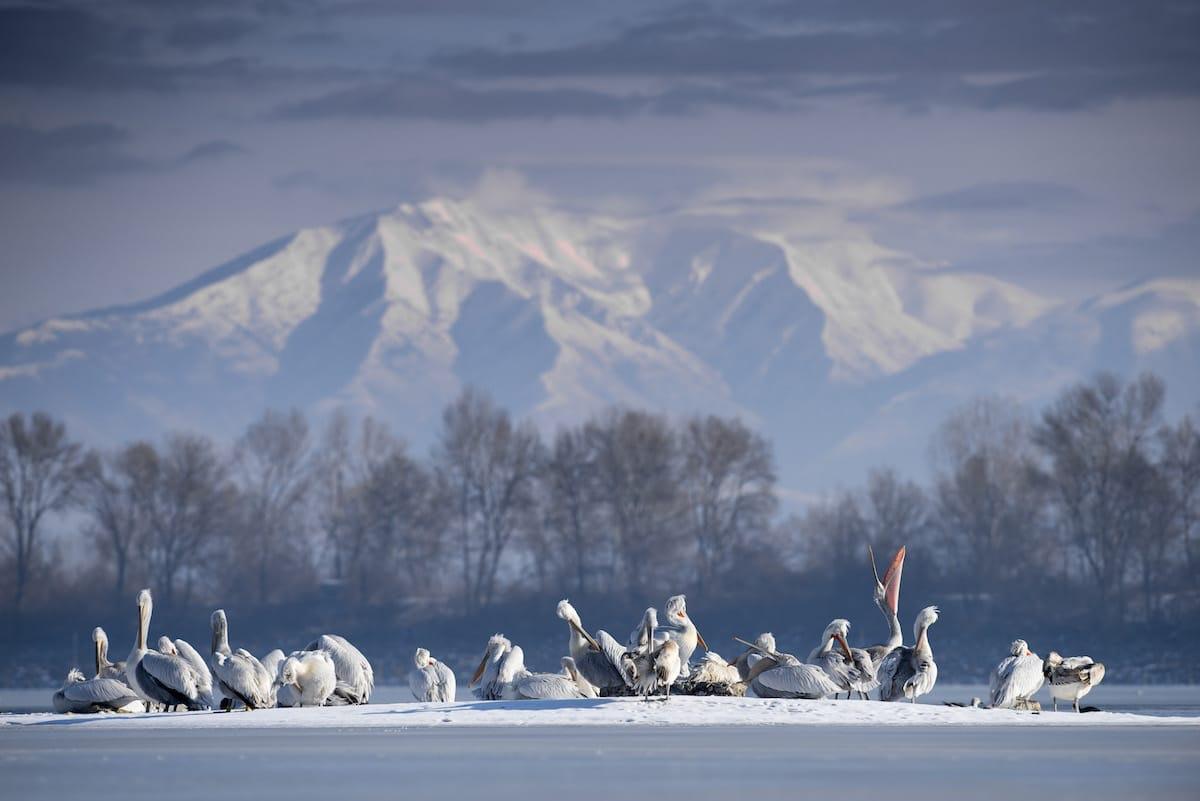 bird-photographer-of-the-year-contest_11