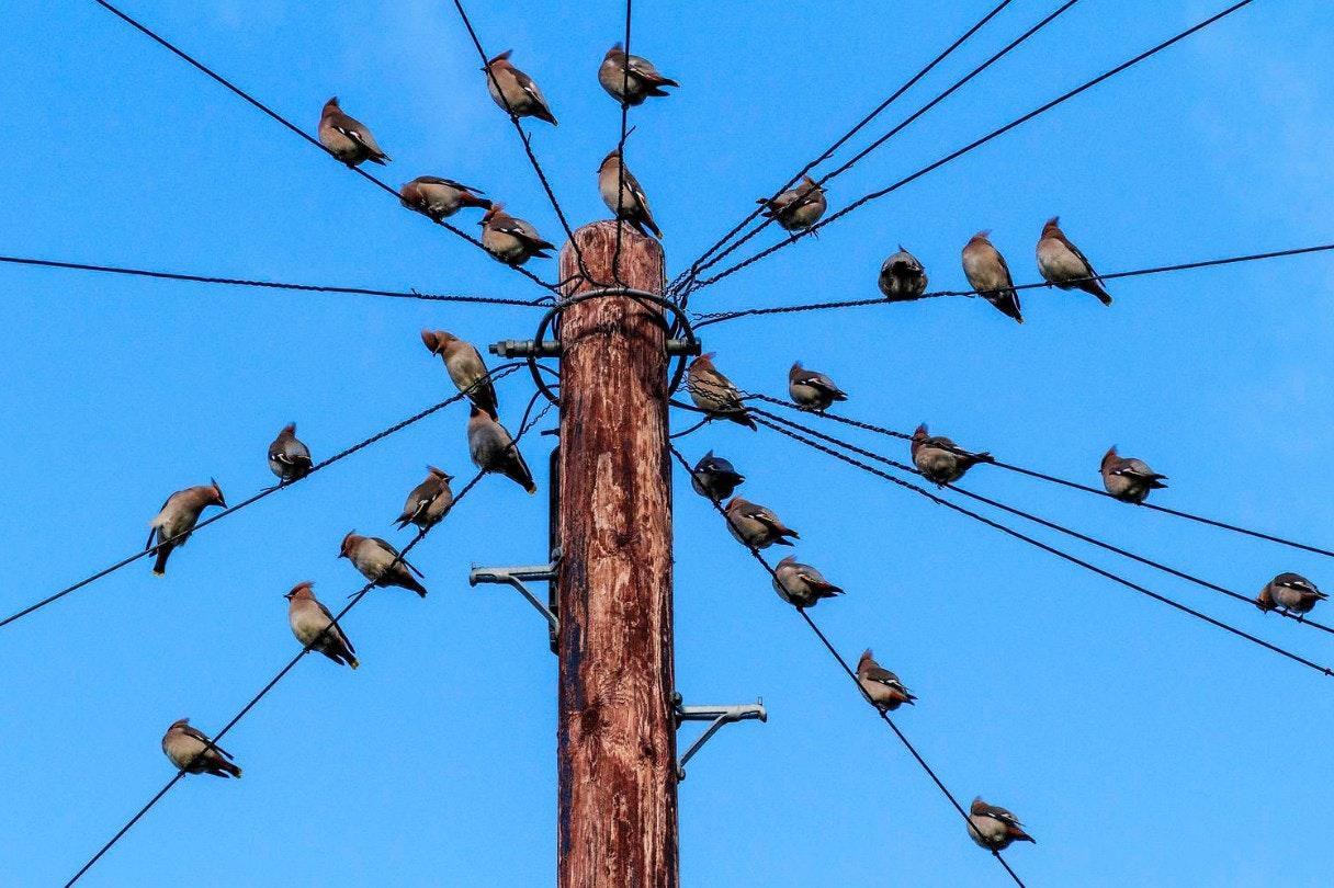 bird-photographer-of-the-year-contest_16