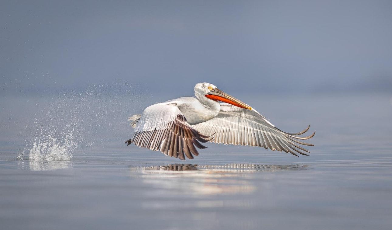 bird-photographer-of-the-year-contest_19