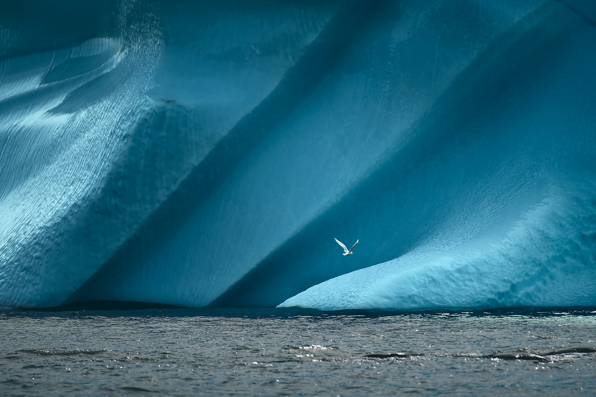 GREENLAND_bird_in_front_of_Iceberg_by_Maria_Sahai