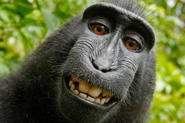 monkey-selfie-lawsuit_cover