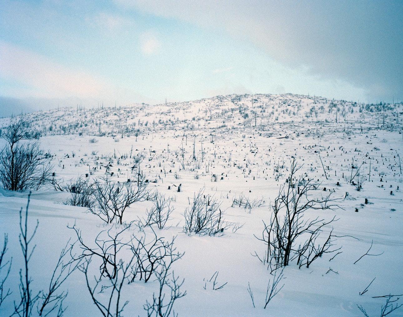 polar_nights_20