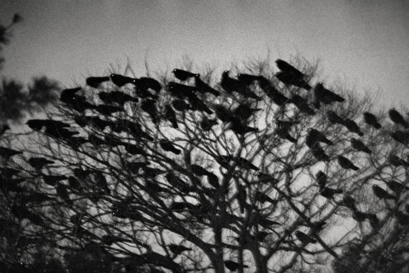 Ravens4