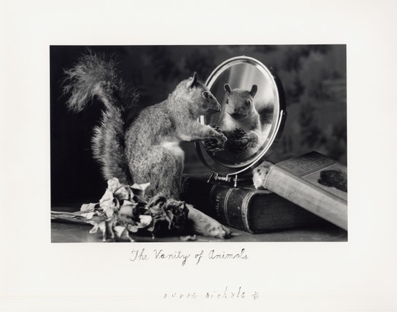 The Vanity of Animals, 2004