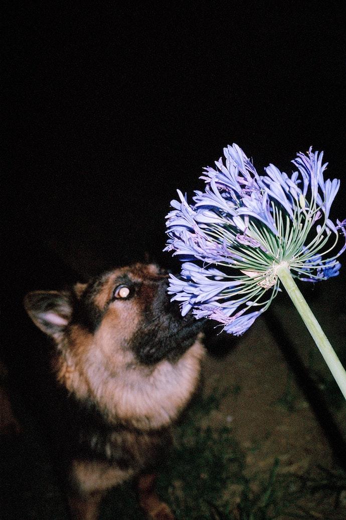 chienfleur1