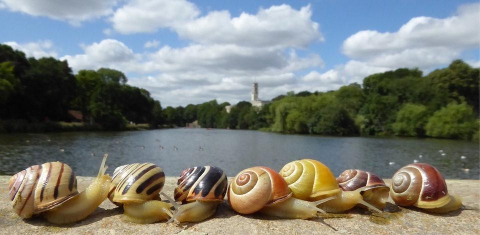 UoN_snails_credit_Daniel Ramos Gonzalez