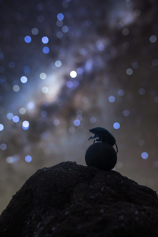 S75880305840_Celestial Navigator © Robin Stuart