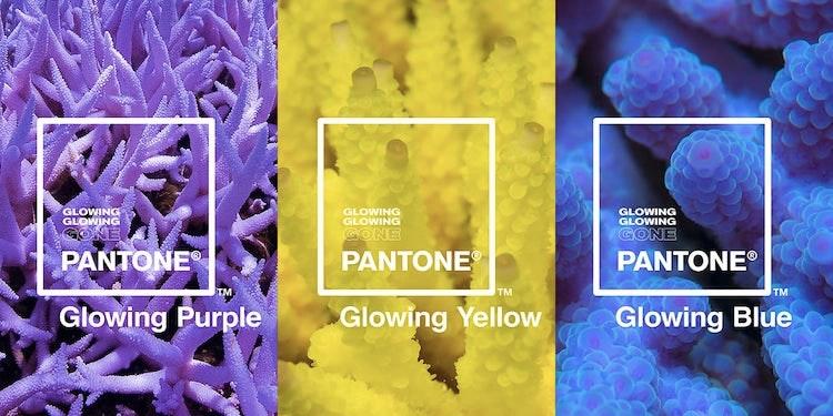 glowing-glowing-gone-pantone-ocean-agency-4