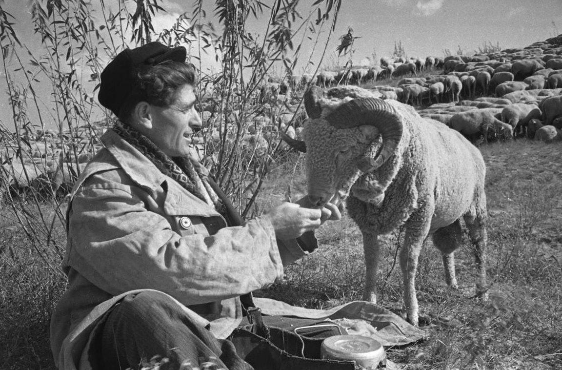 Цюрюпинский-совхоз.-'Цюрюпинский'-_1960_фото-Ирины-Пап