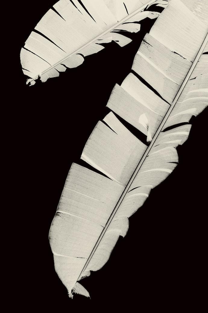 007-Paul-Cupido-Mu-lowres