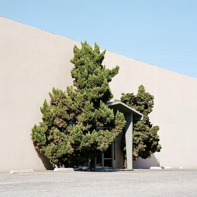 Velichescy_a tree_prize(2)