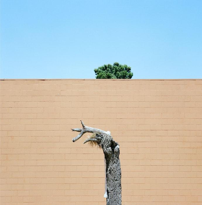 Velichescy_a tree_prize(4)
