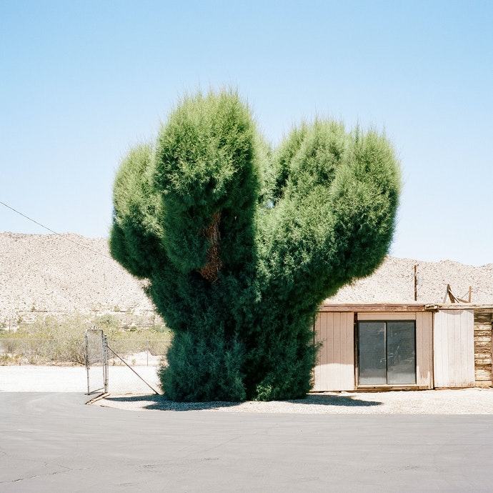 Velichescy_a tree_prize(6)