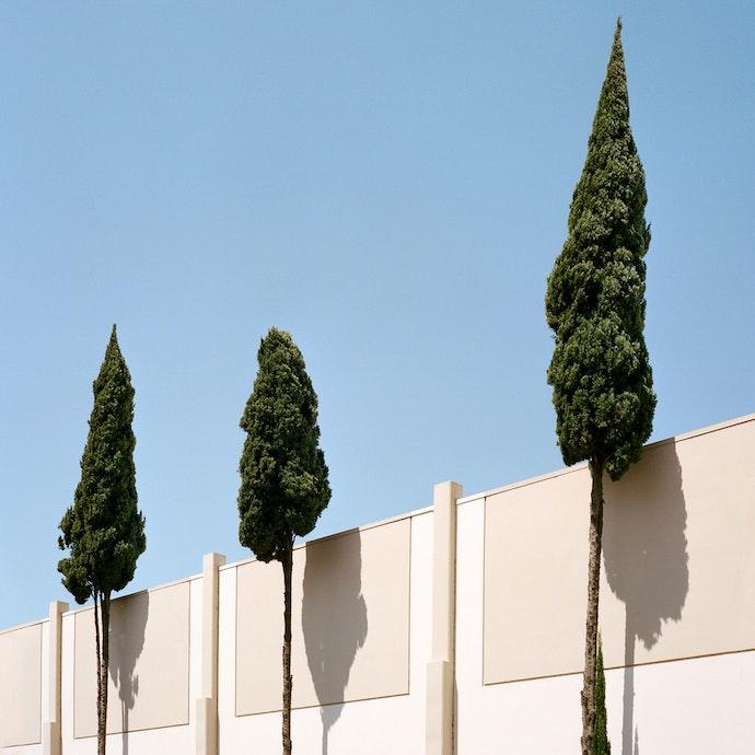 Velichescy_a tree_prize(7)