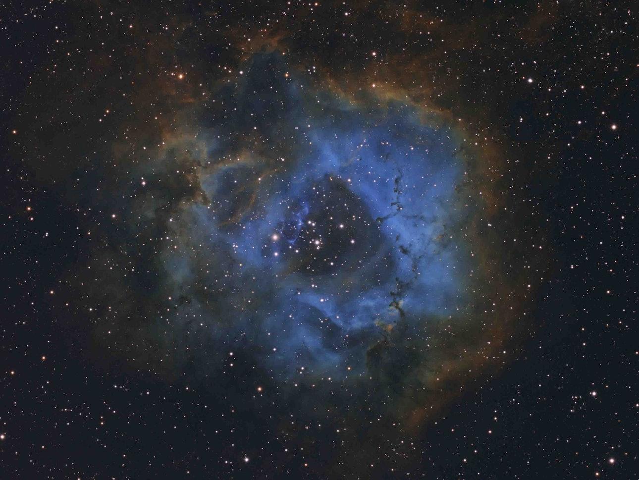 Y3254502261248_Winner_Stellar Flower © Davy van der Hoeven