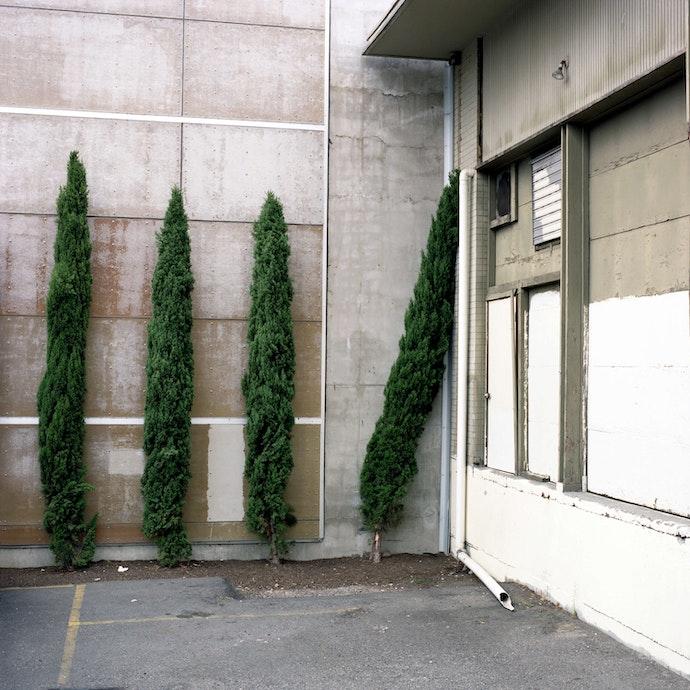 lazy_tree_carson_2009-2