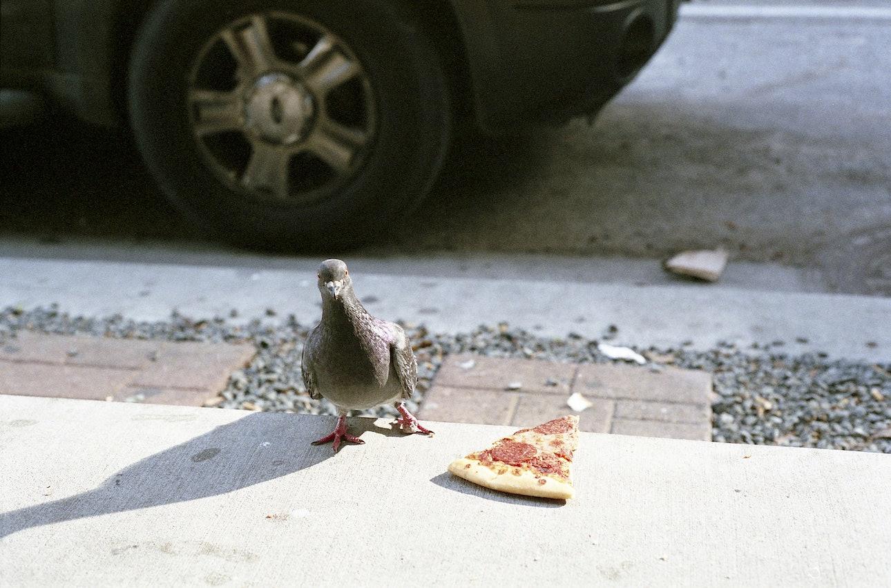 pigeon_pizza