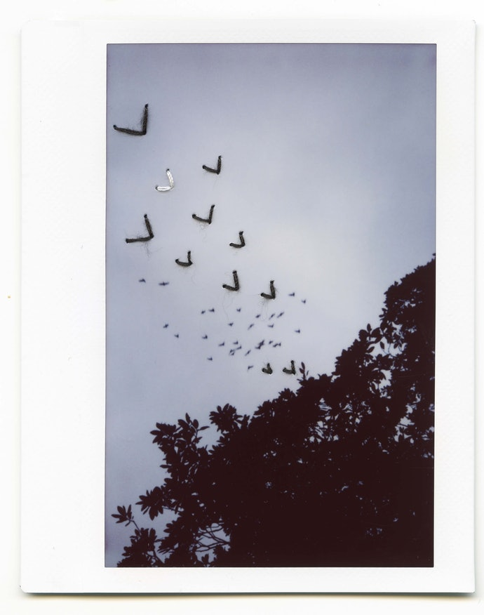 polaroid_052 copy