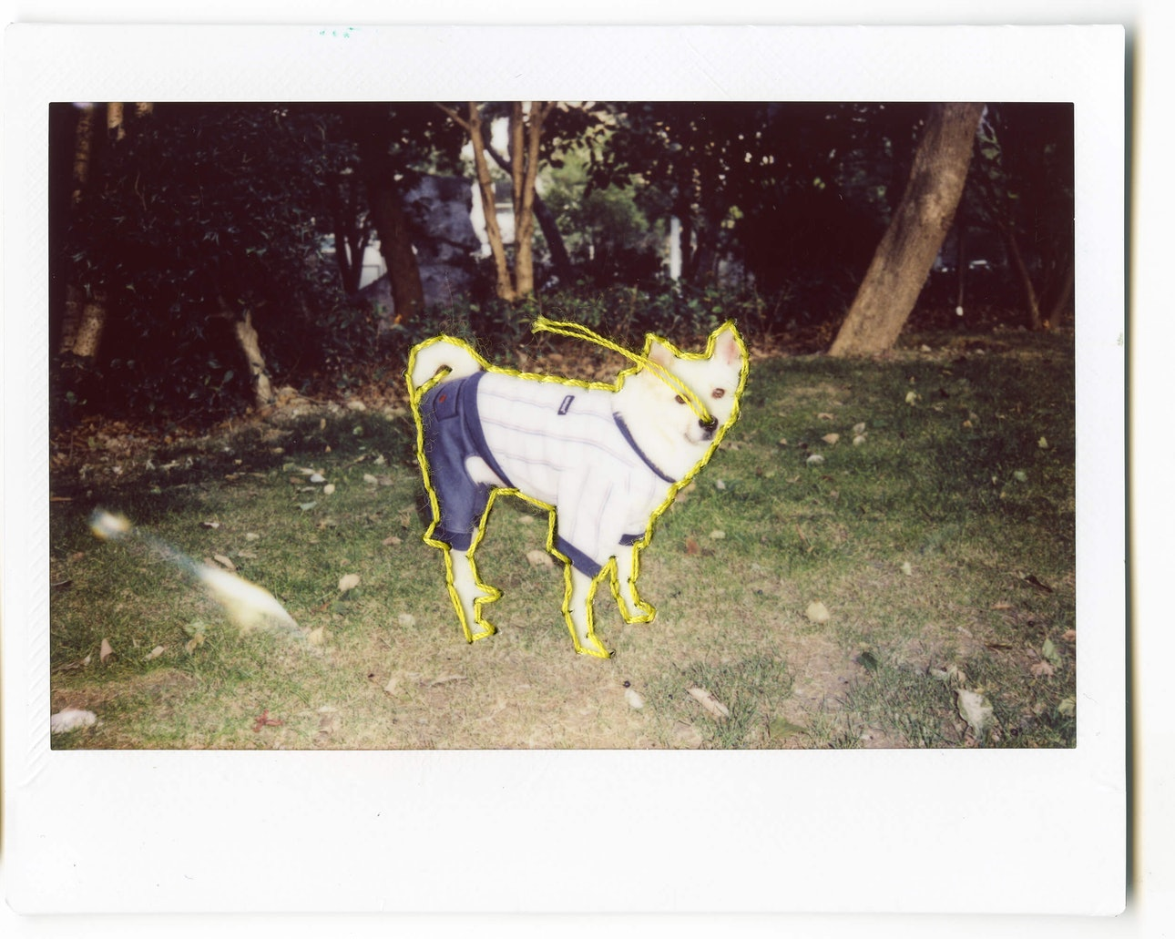 polaroid_067 copy