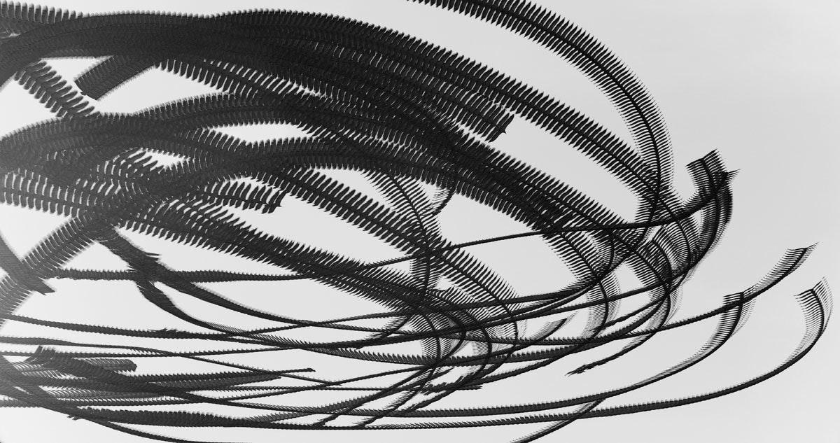 Ornitography_#161
