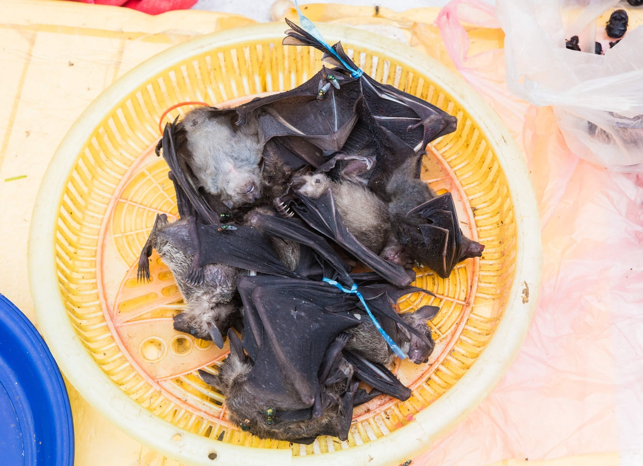 Depositphotos: Лаос_wird_food_china