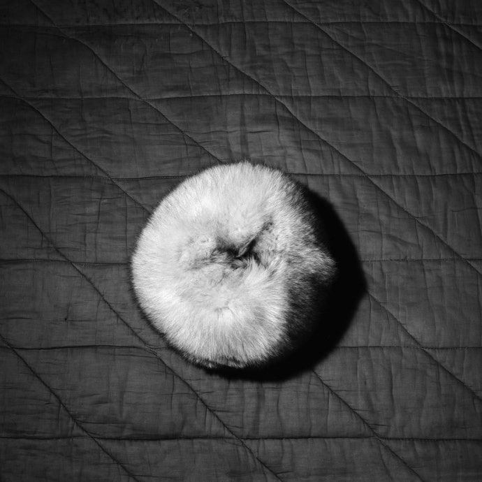 evidence-08_orlov