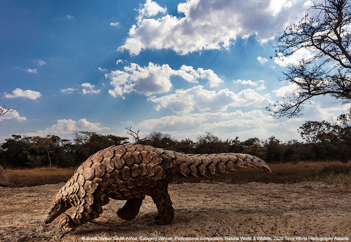 ©-Brent-Stirton-South-Africa-Category-Winner-Professional-competition-Natural-World-Wildlife-2020-Sony-World-Photography-Awards