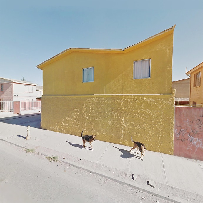 Dogs and Yellow Wall_Chile_agoraphobia