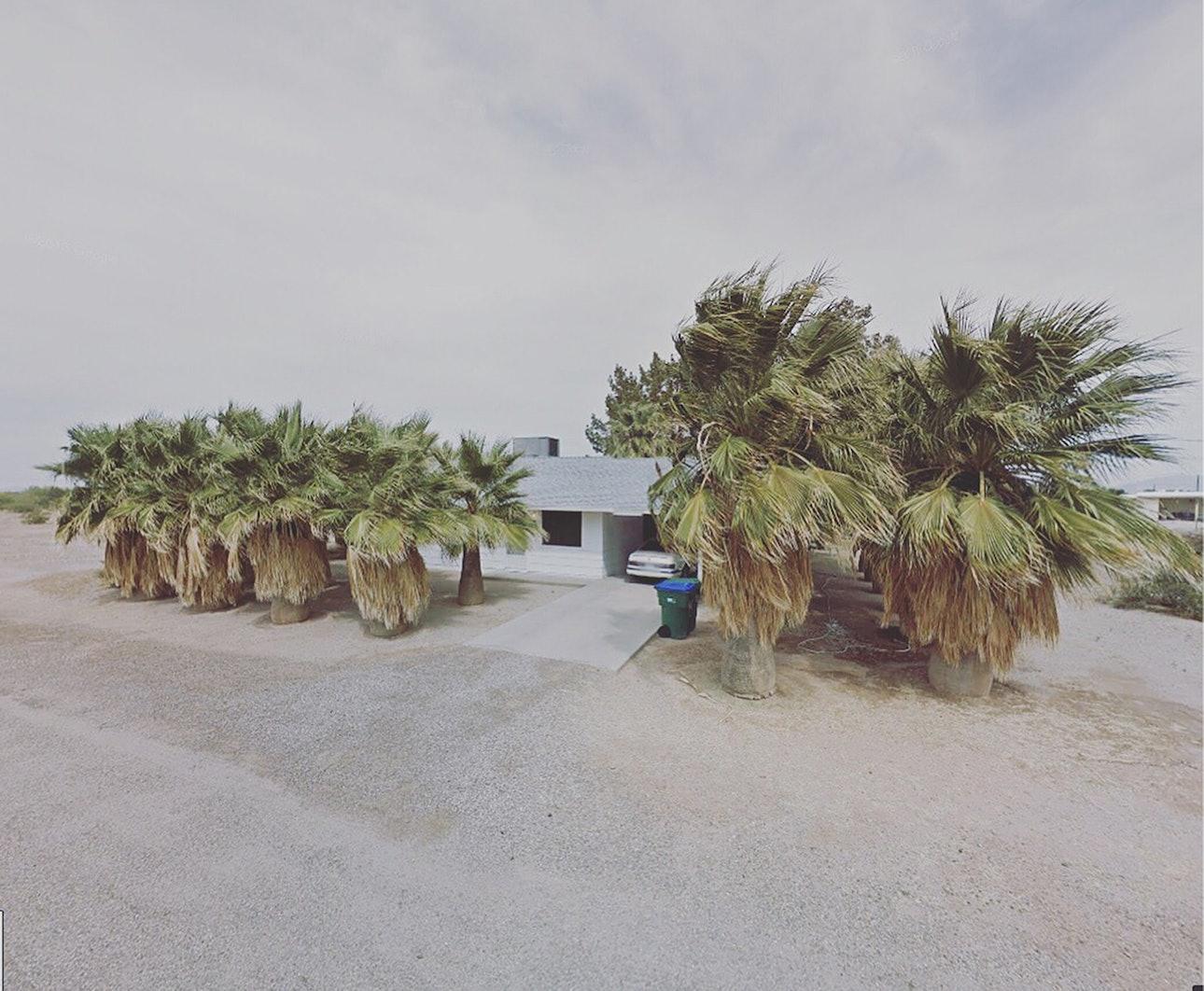 Palm Trees_USA_agoraphobia