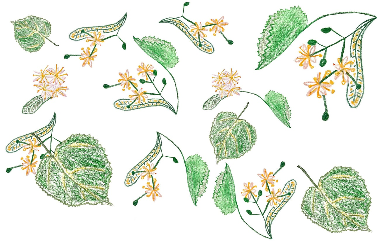 image00003_pokladova_plants
