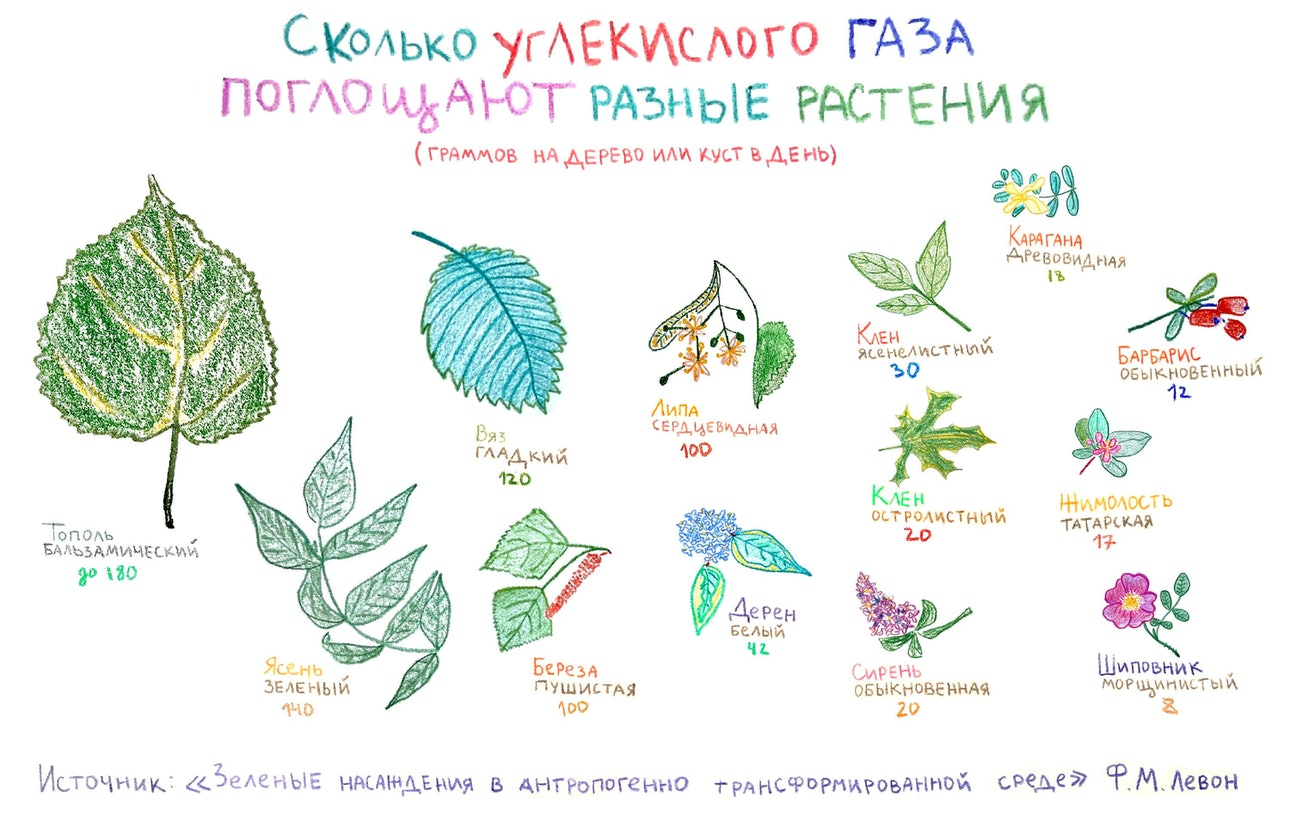 table_pokladova_plants_new-2