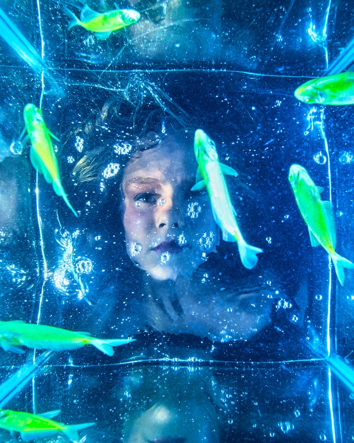 Glofish Gymnocorymbus ternetzi (TETRA)