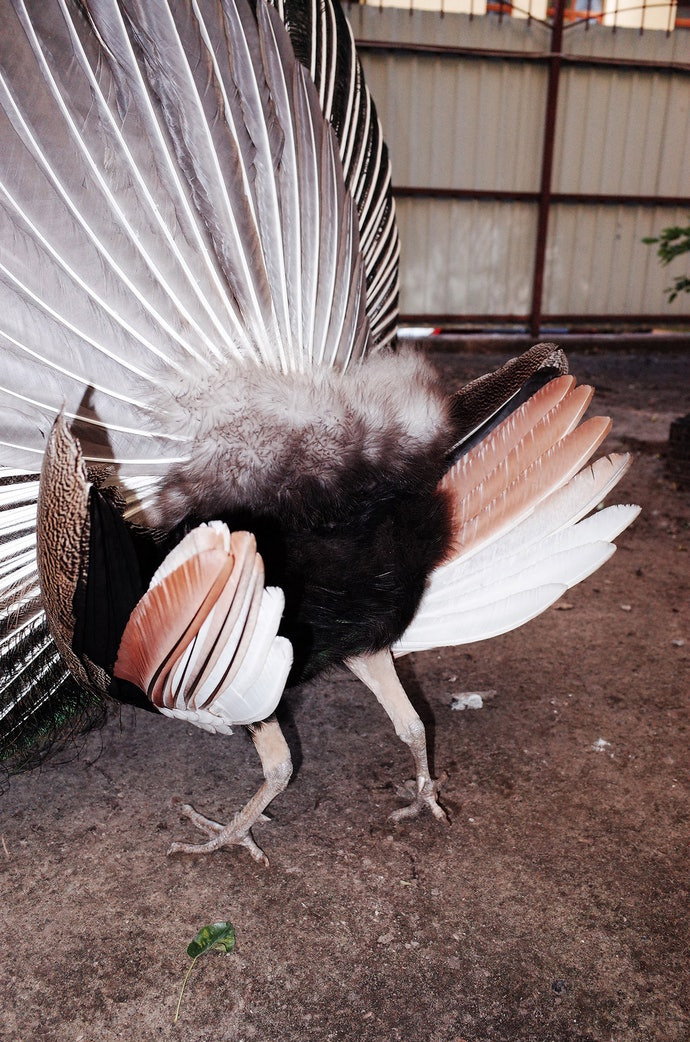 MB230412_bochkarev_birds