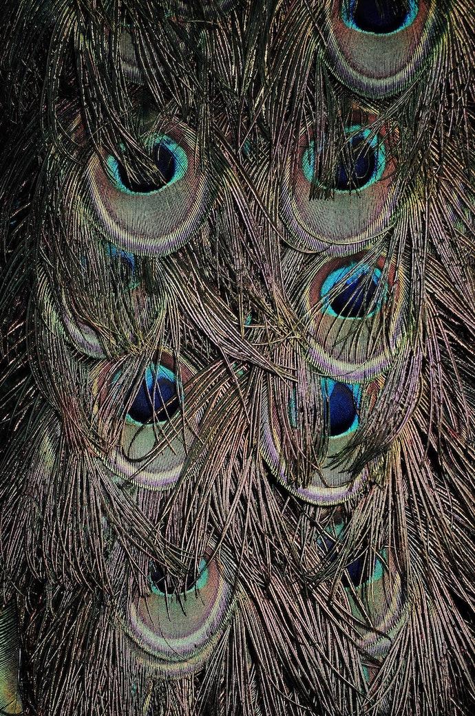 MB230707_bochkarev_birds