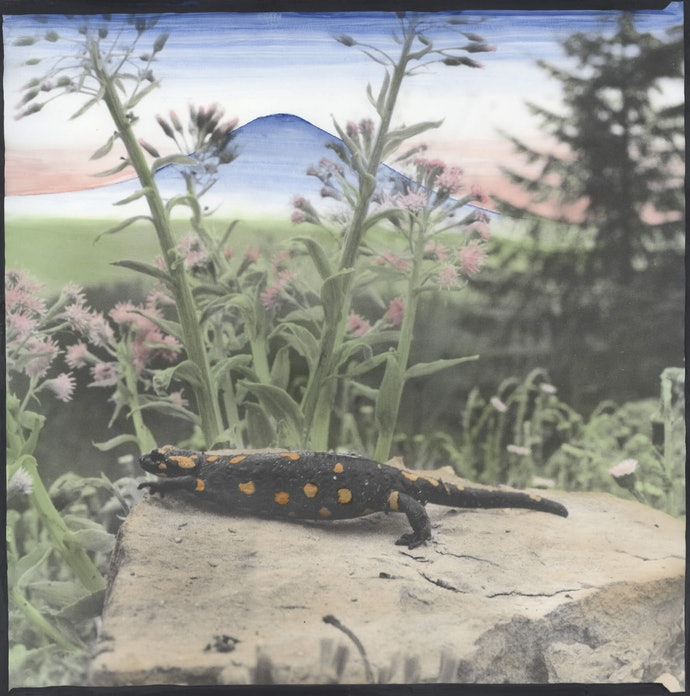 Dmytro_Kupriyan_02_-_Fire_salamander_runs_away_from_the_stone