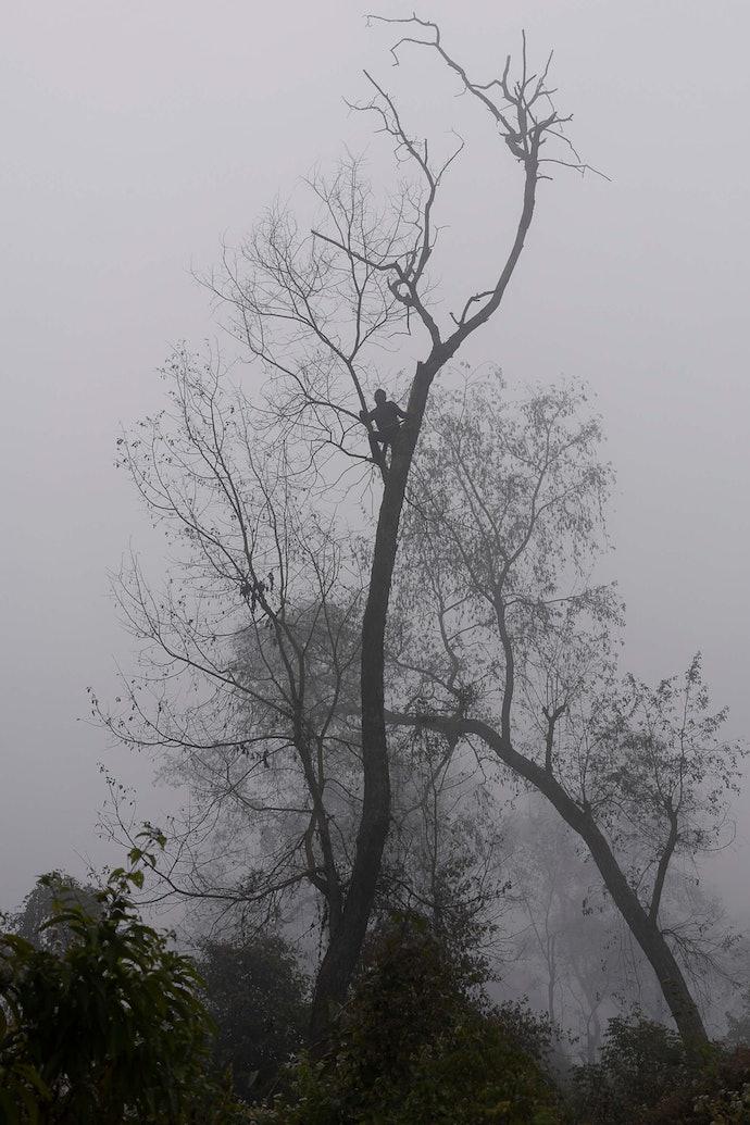 314902_Man-on-a-treeforest_Pietro_Lo_Casto_prize_2020