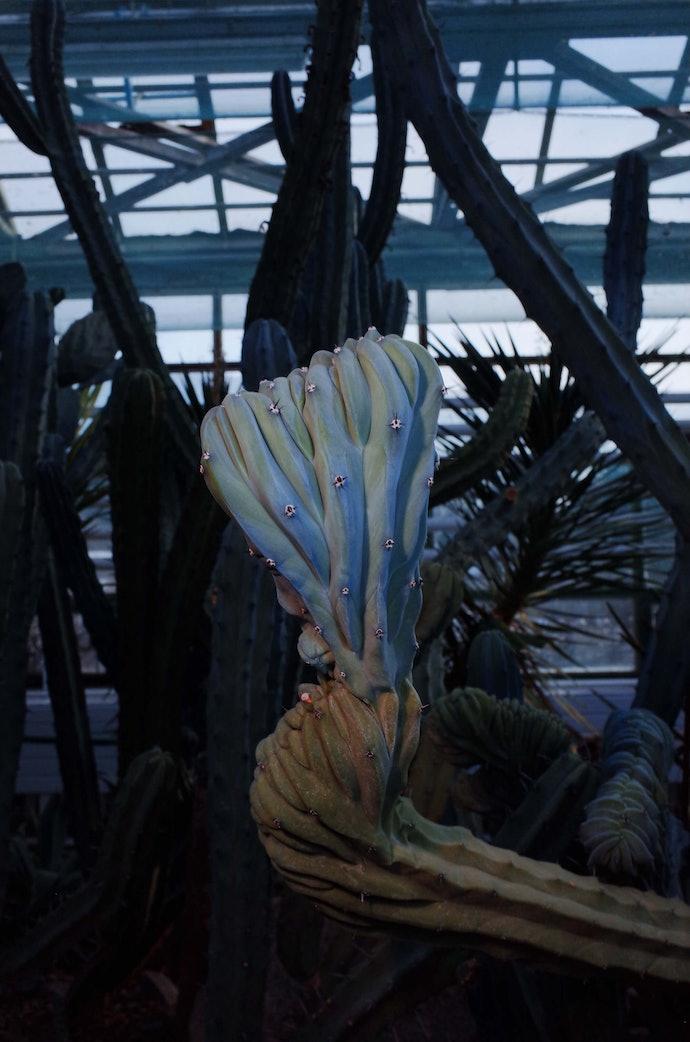 MB246109_botanic_bochakarev
