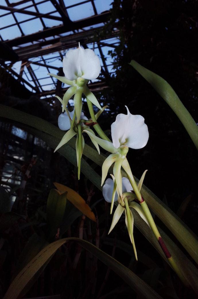 MB246361_botanic_bochakarev