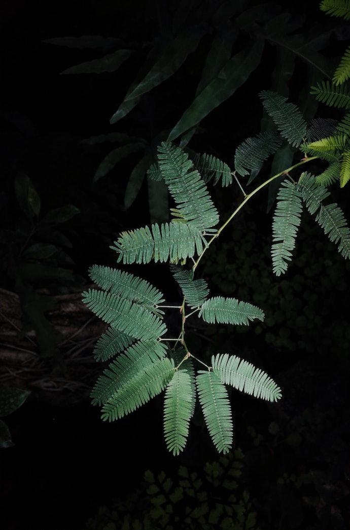 MB246389_botanic_bochakarev